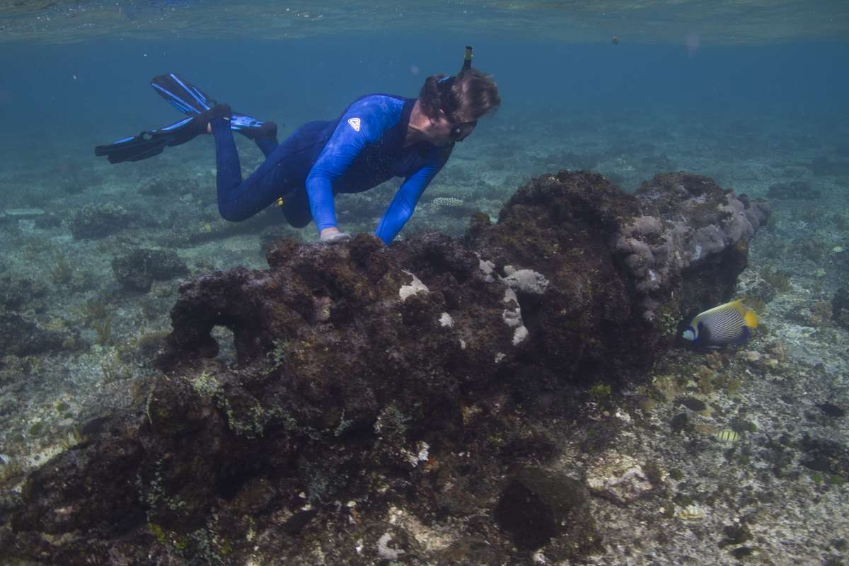 Peter Illidge (GBRMPA) inspected a ship's windless on Great Detached Reef. PHOTO: Xanthe Rivett, Silentworld Foundation.