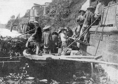 Chinese labourers loading bananas into a steamer from their punts at Geraldton (now Innisfail).