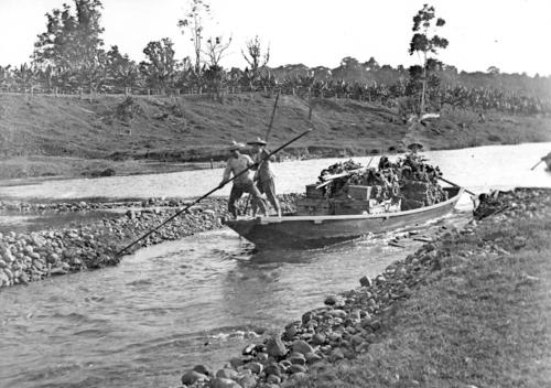 Poling a sampan loaded with bananas in the Innisfail district in the early 1900s.