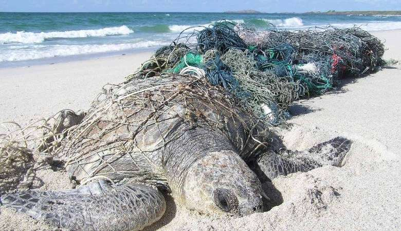 Turtle caught in ghost nets