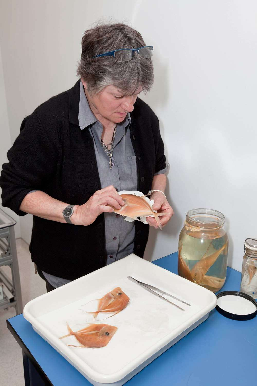 Museum specialist Sandra Raredon selects specimens to be photographed