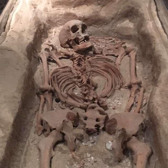 Batavia shipwreck skeleton