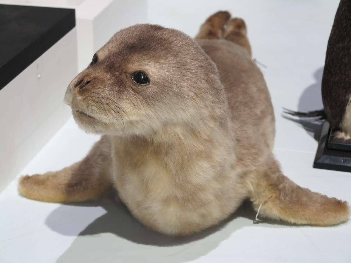 Seal. Image: Kate Pentecost /ANMM.