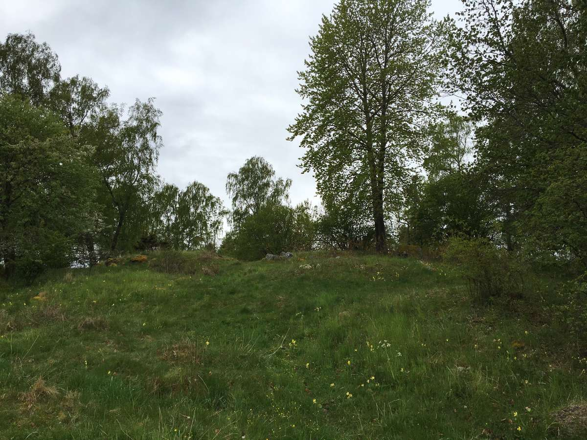 Some of the many grave mounds