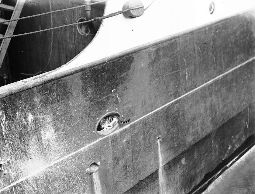 A cat sitting in the fairlead (opening in the ship