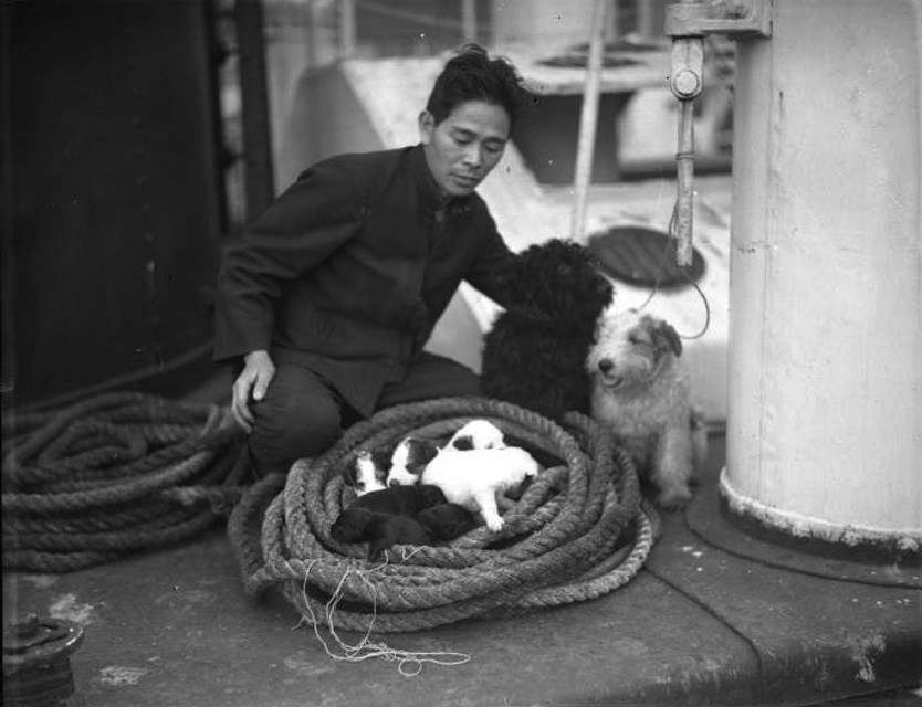 Sailor on YAHIKO MARU with two terriers and a litter of puppies. Image: Samuel Hood / ANMM Collection 00035951.