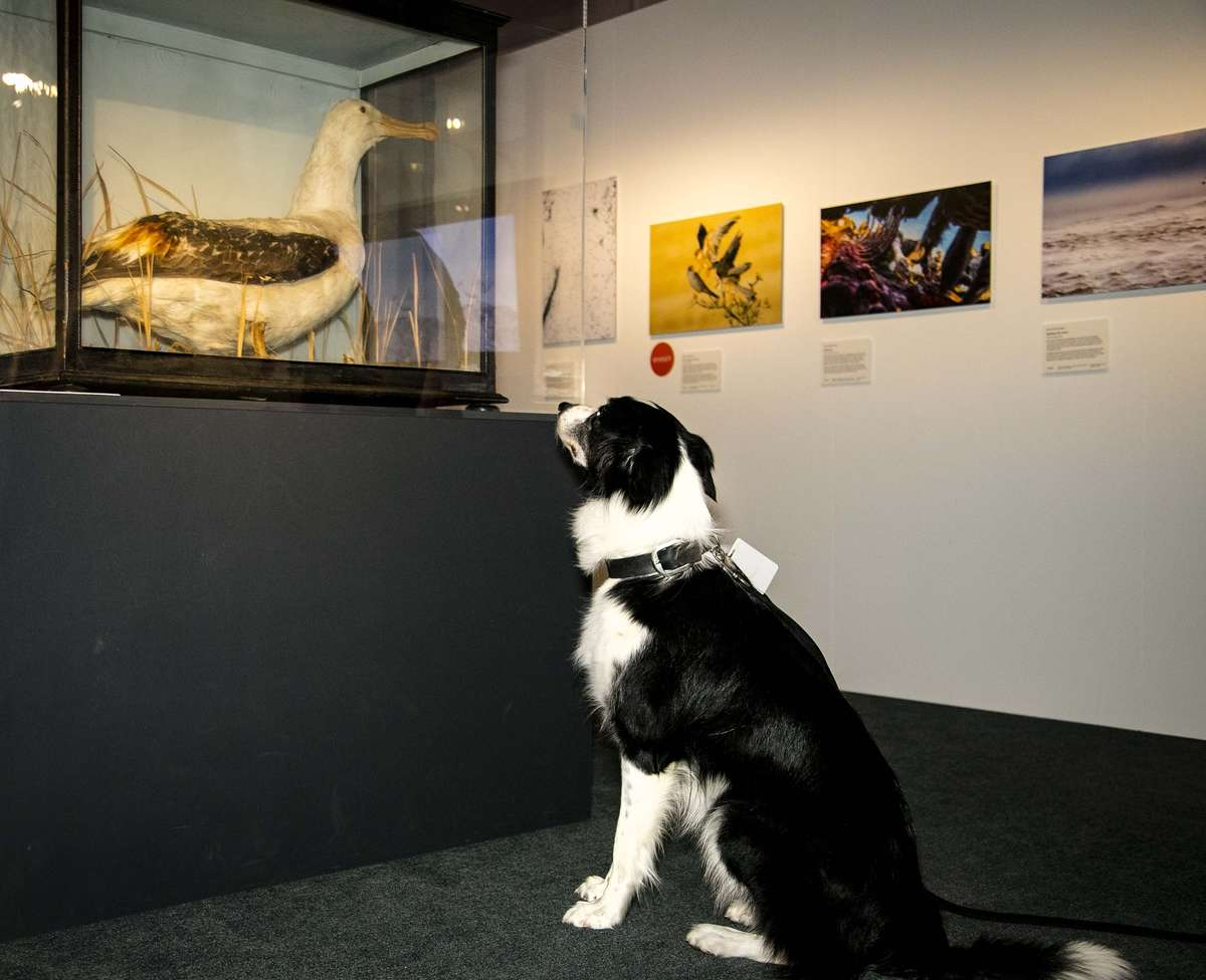 Bailey visits Wildlife Photographer of the Year. Image: Andrew Frolows / ANMM.