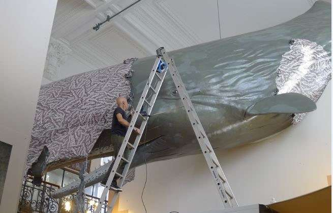 Exhibition staff removing a fresh water print from a whale suspended from the roof. Image: Rhondda Orchard / ANMM.