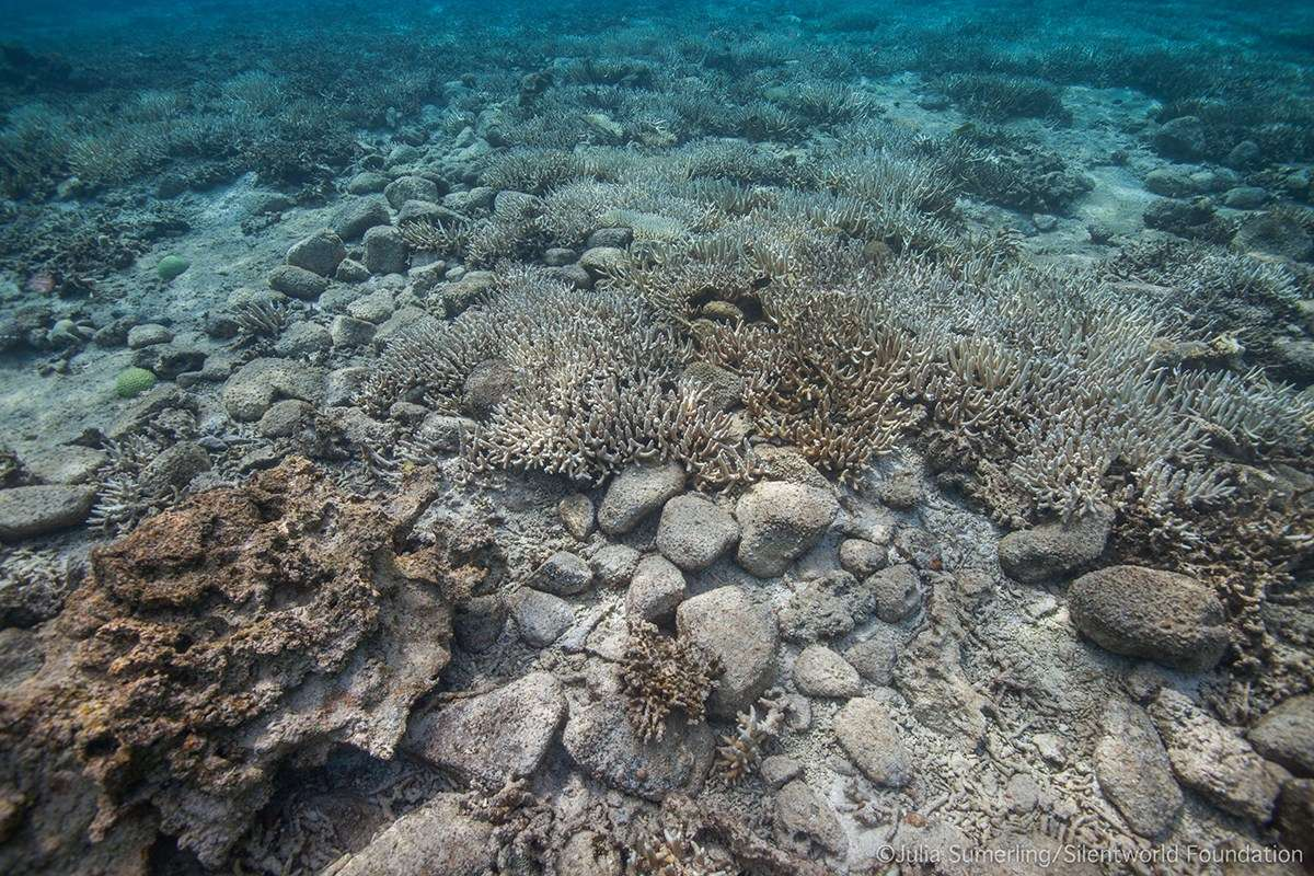 This scatter of stone ballast was a new discovery, and may cover remnants of a shipwrecked vessel's hull. Image: Julia Sumerling/Silentworld Foundation.