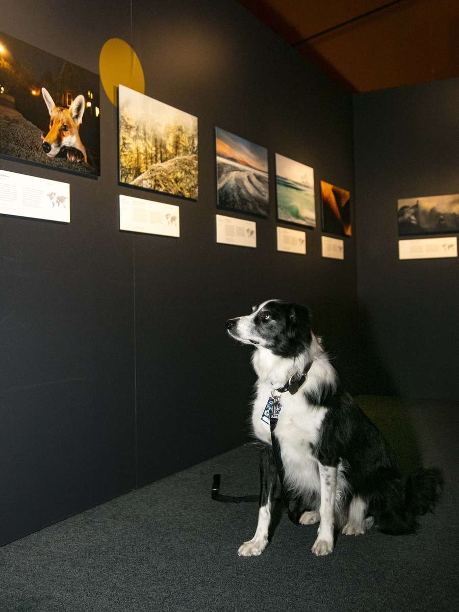Bailey spots a fox at Wildlife Photographer of the Year