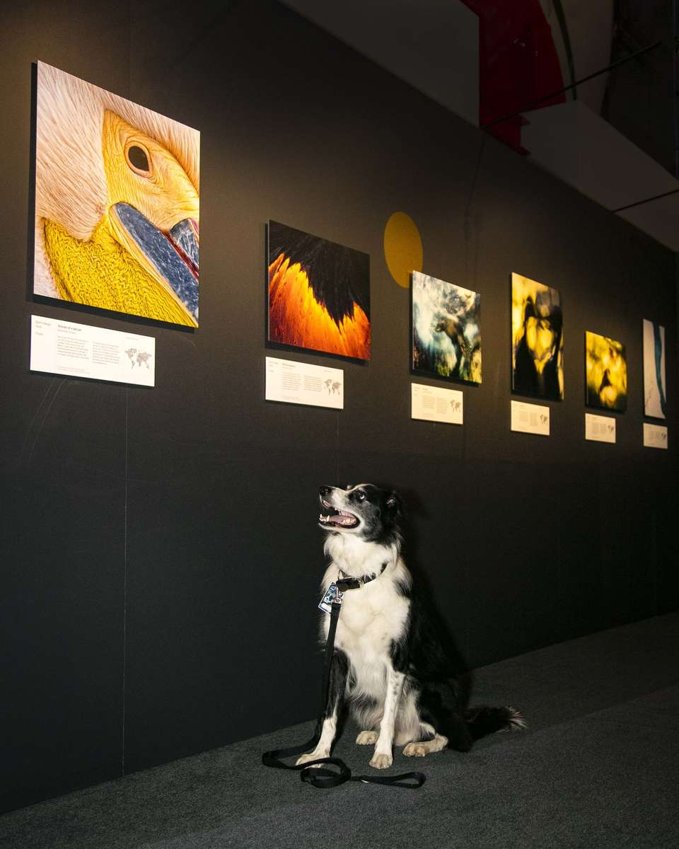 Bailey inspects Wildlife Photographer of the Year.