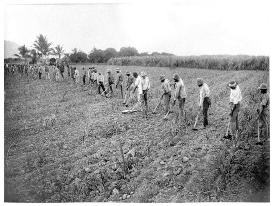 South Sea Islanders working in a field, c 1870-1900. Queensland State Archives, Digital Image ID 22994