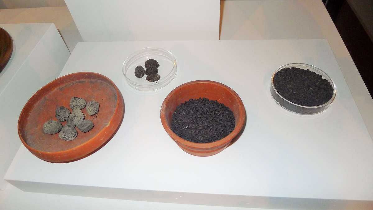 Figs, in the bowl to the far left, and grains found at Pompeii, as displayed in <em>Escape from Pompeii</em>. Image: Will Mather/ANMM.