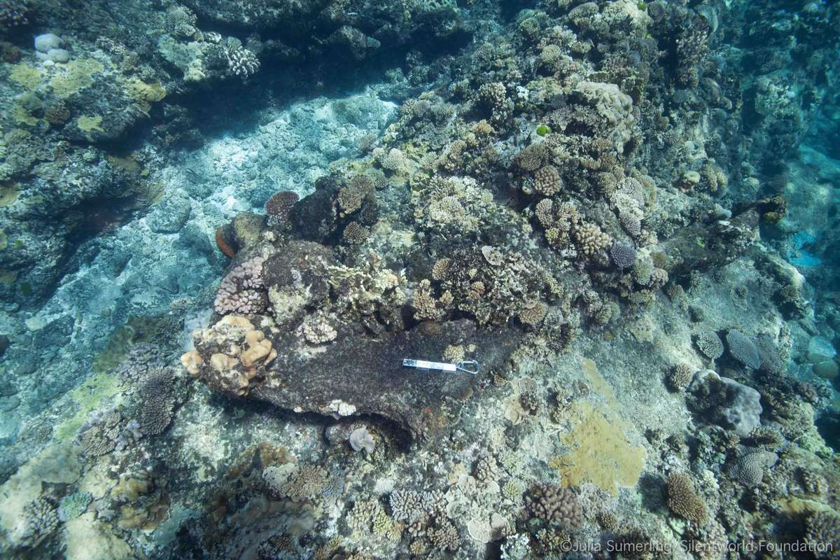 Hard corals are thriving on a number of large iron artefacts at Kenn Reefs, including this Porter-patent anchor. This suggests a possible reversal of the Black Reefs phenomenon at some historic shipwreck sites. Image: Julia Sumerling/Silentworld Foundation.