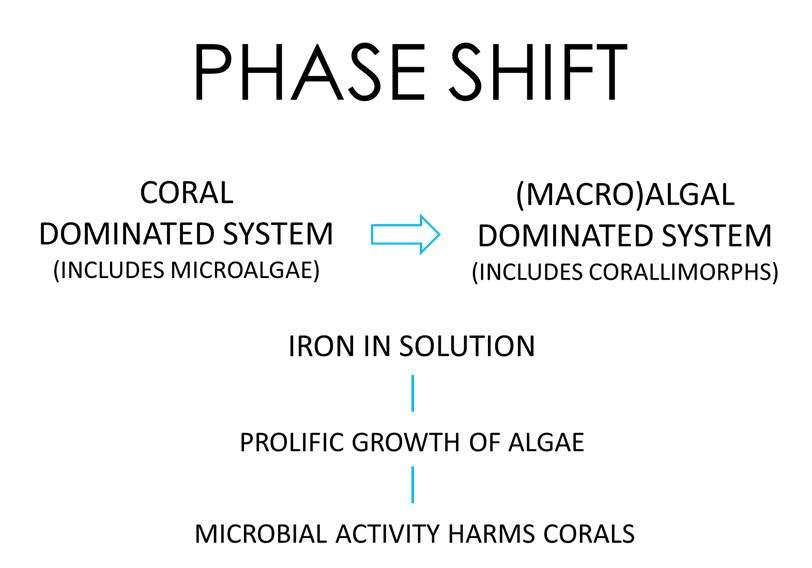 This diagram illustrates the 'phase shift' that occurs when a coral dominated reef system is affected by increased iron in solution, and subsequently replaced by a predominantly (macro)algal reef system. Image: Irini Malliaros/Silentworld Foundation.