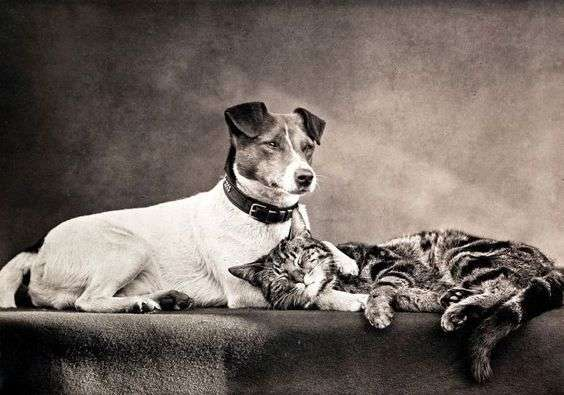 Dog and Cat – The only survivors aboard the ghost ship. Although they were alive and well, they stayed silent on what terror had been faced. Image: Royal Photographic Society, via wiki media/Victoria and Albert Museum.