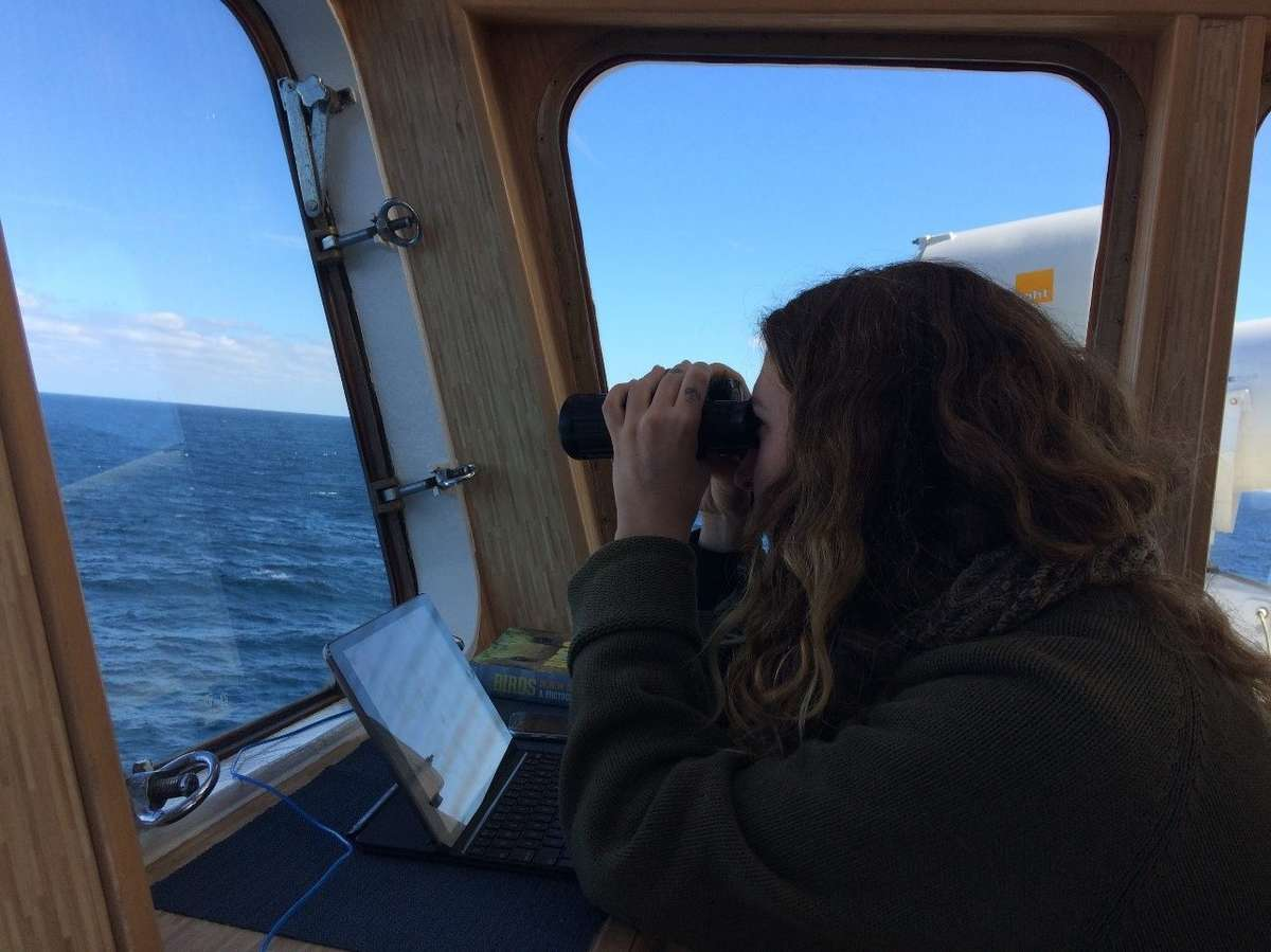 Dani Harmshaw searches for elusive shearwaters from the Monkey Bridge. Image: Emily Jateff/ANMM.