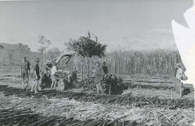 Harvesting of sugarcane in North Queensland. Courtesy Archivo Gráfico de Carta de España.