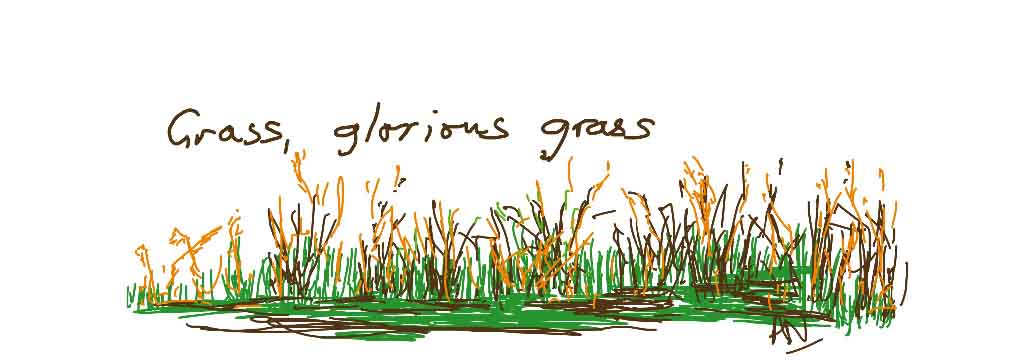 Grass in all its glory!