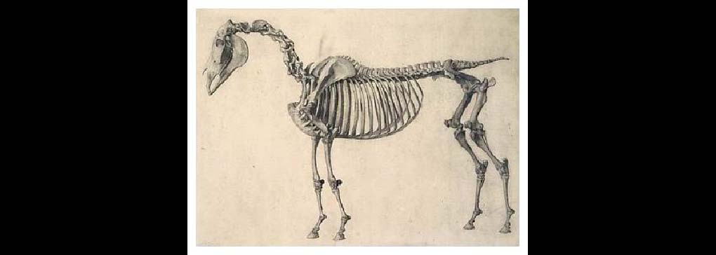 The Horse continued
