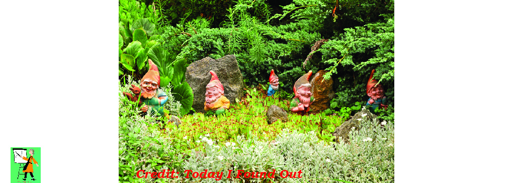 Does your Garden Need a Gnome?