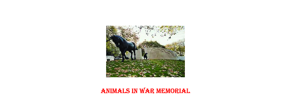 Remembering Our Wonderful Animals