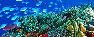 explore-the-great-barrier-reef-during-stamp-collecting-month-2018-2