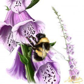 Bee'tween the foxgloves
