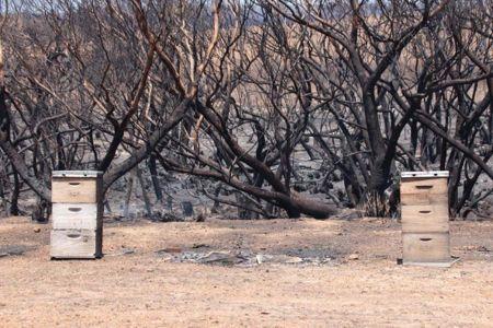 Bee hives in bushfires