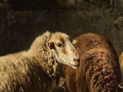 Gebler sheep