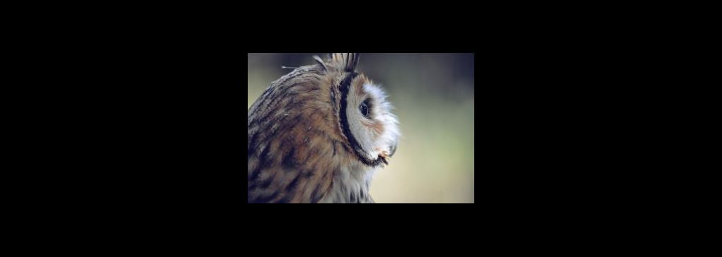 The beauty of owls