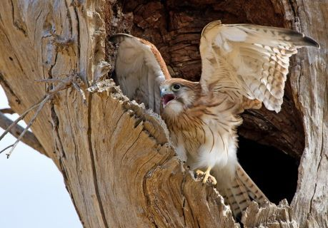 Birds through the lens of Patrick Kavanagh