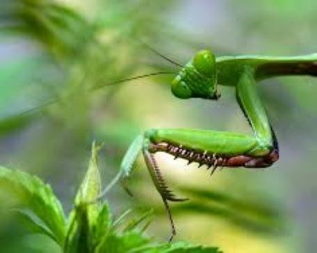 Connecting with nature - insect photography with a purpose