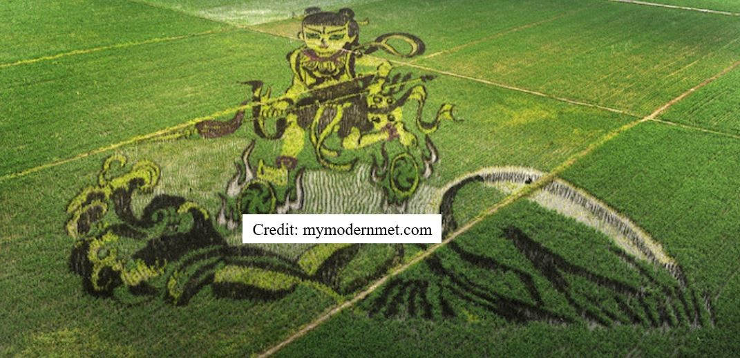 More Rice Art