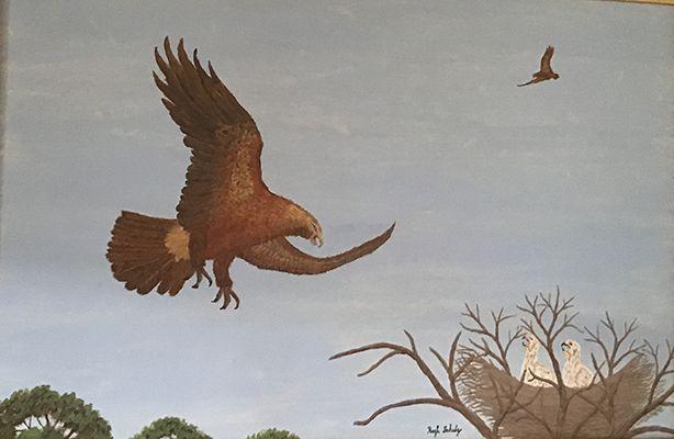 Hugh Schulz Untitled  of an Eagle