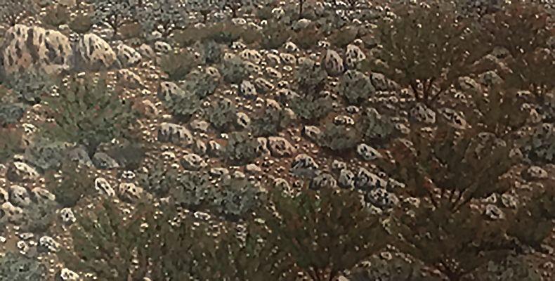 Hugh Schulz Untitled Detail
