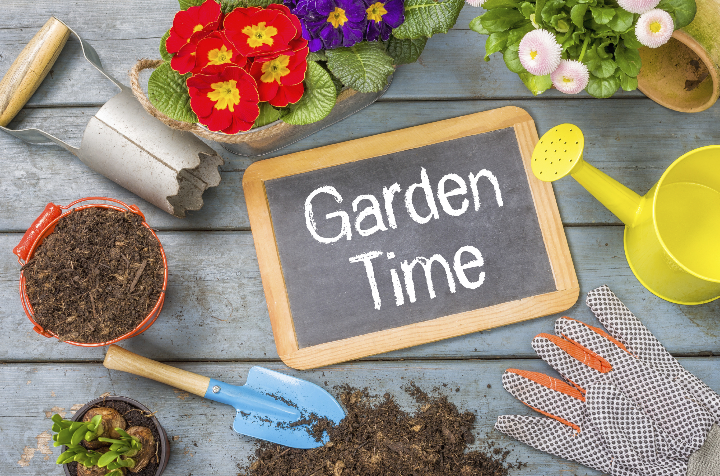 5 savvy ways to beautify your garden the reject shop Savvy home and garden