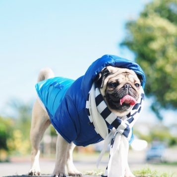 4 Tips For Your Pet To Combat Winter