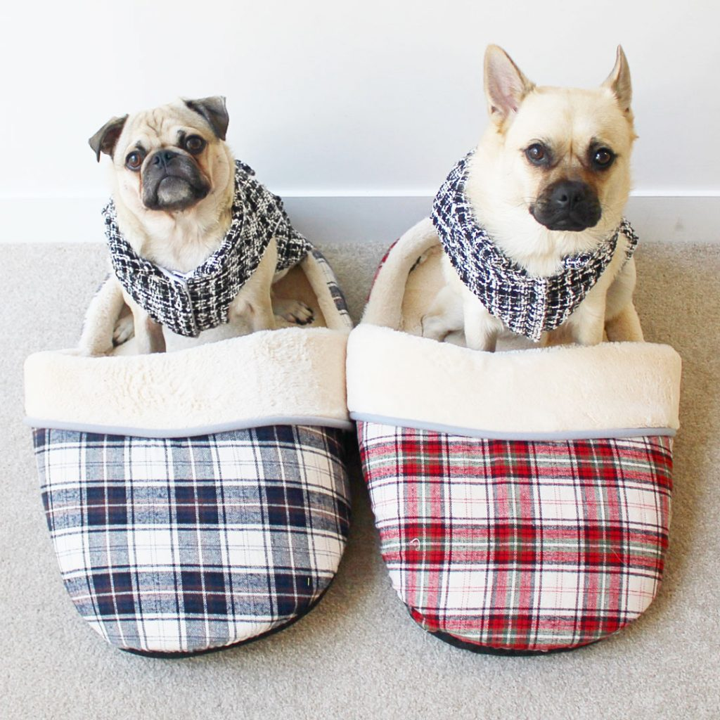 Tips to keep your pet warm during winter