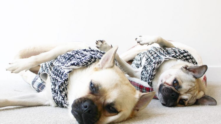 Top 5 Tips to Keep Your Dog Warm During Winter