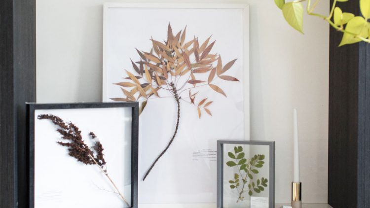 DIY Herbarium under $15!