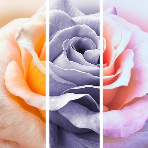 Online | Colour and Design with Rachel Fairfax