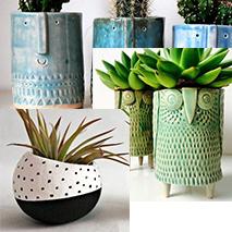 Creative Ceramic Planters   David Edmonds