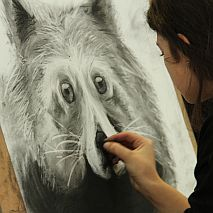 Draw | Bold + Expressive Animals | 10 +