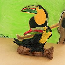 Clay   Exotic Birds   5-8 years