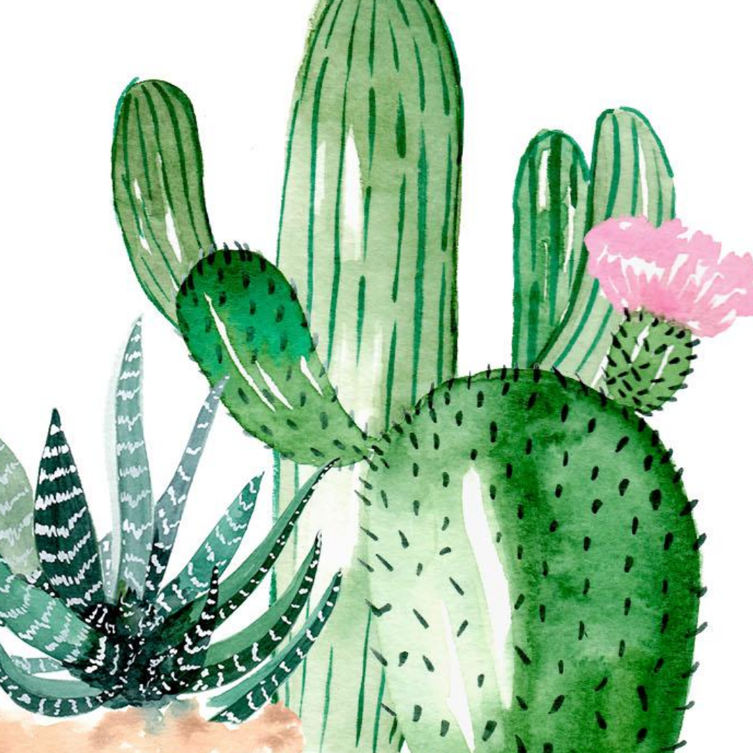 Art Nights | Online | Watercolour Succulents and plants with Monika Diak