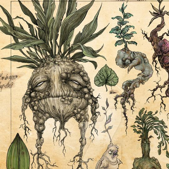 Creative Drawing | Mandrakes Strange Botanicals |  8-12 years