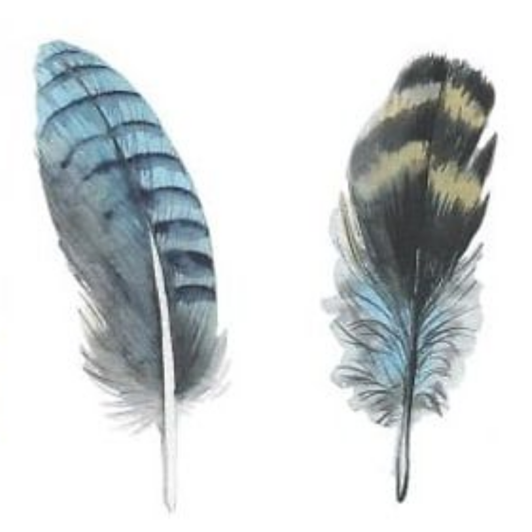 Art Nights | Online | Watercolour Feathers with Monika Diak