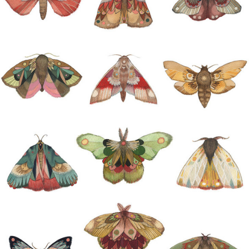Online | Magnificent Moths | 5-9 years
