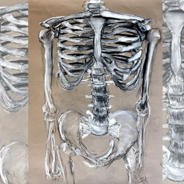 Draw Skeletons Learn Anatomy | 10 +